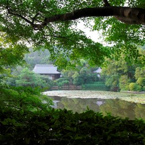 Destinos preferidos. Kyoto