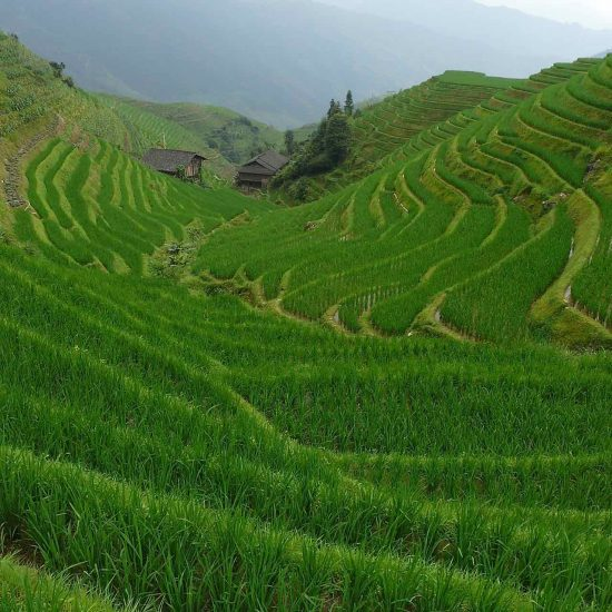 Terrazas de arroz de Longji, China