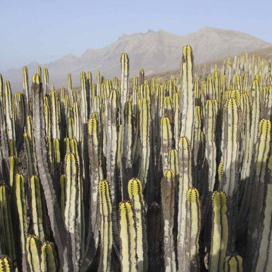 jardines de cactus en Fuerteventura