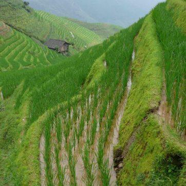 Arrozales de Longji, excursión desde Guilin