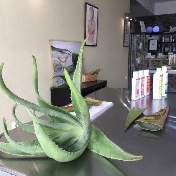 Aloe vera en Canarias