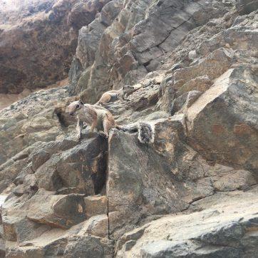 Ardillas en las cuevas de Ajuy